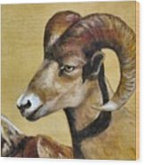 Nevada Bighorn Wood Print