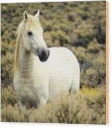 Nevada Wild Horses 3 Wood Print
