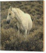 Nevada Wild Horses 4 Wood Print