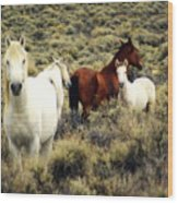 Nevada Wild Horses Wood Print by Marty Koch
