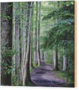 Never Ending Trail Wood Print