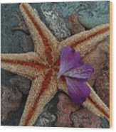 Never Forgotten- Starfish Art Wood Print
