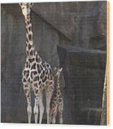 New Baby Giraffe Wood Print
