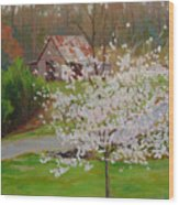 New Blossoms Old Barn Wood Print