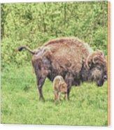 New Born Bison Wood Print