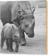 New Born Rhino And Mom Wood Print