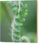 New Bracken Fern Wood Print by Neil Overy