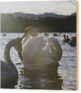 Duddingston Swan 11 Wood Print