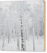 New England - Snow Covered Forest Wood Print