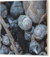 New England Beach Shells Wood Print