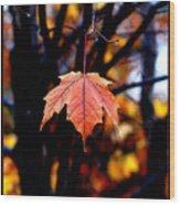 New England Fall - Lone Wood Print