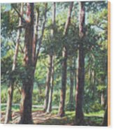 New Forest Trees With Shadows Wood Print