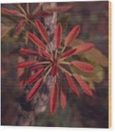 New Growth On A Shea Tree Wood Print