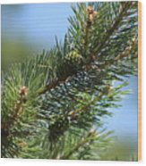 New Growth Pinecone At Chicago Botanical Gardens Wood Print