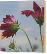 New Jersey Wildflowers In The Wind Wood Print