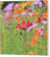 New Jersey Wildflowers Wood Print