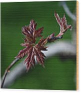 New Leaves Wood Print