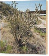 New Mexico Cholla Wood Print