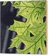 New Oak Leaves    Wood Print