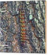 New Orleans Buck Moth Caterpillar Wood Print