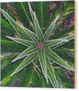 New Palm Leaves Wood Print