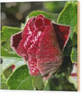 New Red Hibiscus Wood Print