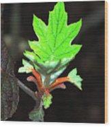 New Spring Leaf Wood Print