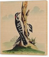 New System Of Ornithology Wood Print