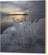 New Year's Eve, Frozen Shrub Wood Print