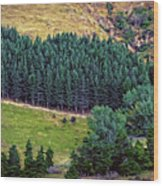 New Zealand Countryside Wood Print