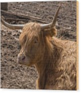 New Zealand Cow Wood Print