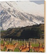 New Zealand Deer 3497 Wood Print