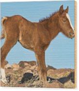 Newborn Colt Wood Print