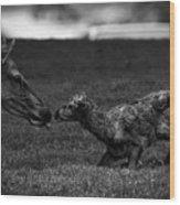 Newborn Elk Wood Print