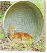 Newborn Fawn Finds Shelter In An Old Washtub Wood Print