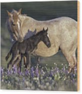Newborn Filly At Dawn Wood Print