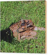 Newborn Red Deer Wood Print