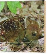 Newborn White-tailed Deer Fawn Wood Print