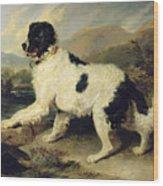 Newfoundland Dog Called Lion Wood Print by Sir Edwin Landseer