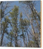 Newport News Park Wood Print