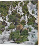 Niagara Springs Wood Print