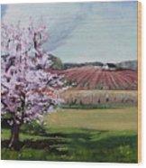 Niagara Vineyards Spring Wood Print