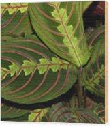Nice Leaves Wood Print