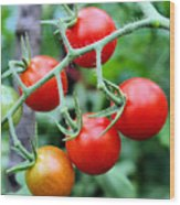 Nice Tomatoes Wood Print