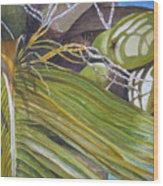 Nick's Coconuts Wood Print