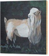 Nigerian Dwarf Buck Wood Print