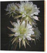 Night Bloomers 4.21 Wood Print