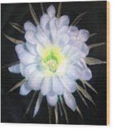 Night Bloomig Cerus Wood Print