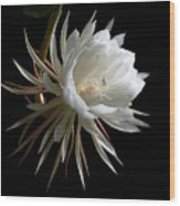 Night-blooming Cereus 1 Wood Print by Warren Sarle