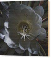 Night-blooming Cereus Deep 2 Wood Print by Warren Sarle